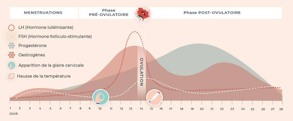 courbe hormones cycle